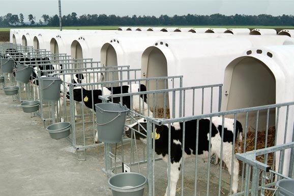Les niches / cages à veau - Agro P.E.S.